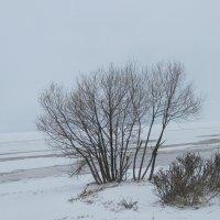 У Финского залива. Февраль :: Маера Урусова