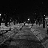 В зимнем парке после уборки :: Николай Филоненко