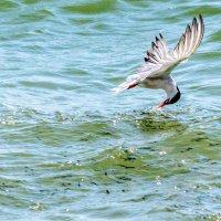 Охота на воде :: K K
