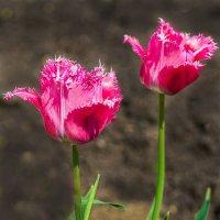 Скоро весна :: Любовь Потеряхина