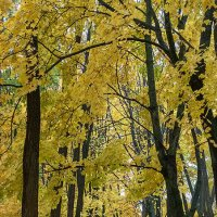 Золотая осень. :: Андрий Майковский