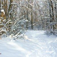 В зимний лес :: Юрий Стародубцев