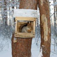 Домик в лесу :: nika555nika Ирина