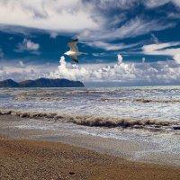 Чайка над морем :: Виктор Шандыбин