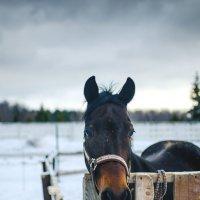 Что-то приуныла лошадка... :: Андрей Володин