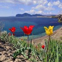 Киммерийские весенние берега :: viton
