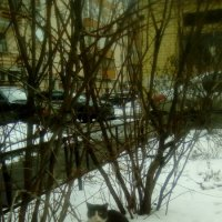 Кошечка Муся с нашего двора! :: Светлана Калмыкова