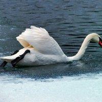 Зима зимой,а плавать хочется! :: Наталья