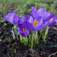 Весна в ...феврале!!! :: Galina Dzubina