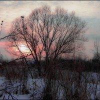 оттенки зимы :: Юлия Денискина