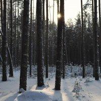 В лесу :: Вера Андреева