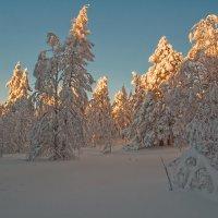 Закат в лесу :: vladimir Bormotov