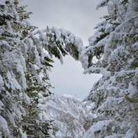 Сибирь :: Юлия Шако