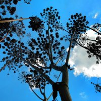 ...вон - ползет жучок блестящий прямо в небо по травинке! :: Иван Миронов