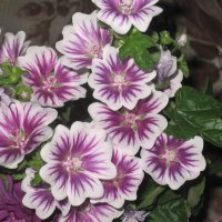 цветики цветочки :: Tatyana Kuchina