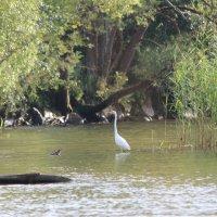 Лето в Латгалии. Озеро Разнас. :: Ирина Волкова