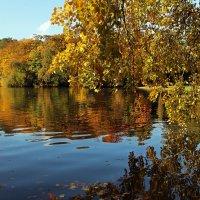Рыжая осень :: Alexander Andronik