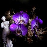 орхидея :: Alexander Varykhanov