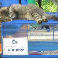 ЁЖкин кот :: Елена Ярова
