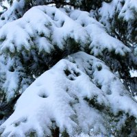 Где деревья стынут в зимнем сне? Ну, конечно, в январе! :: Валентина ツ ღ✿ღ