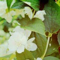 Цветочки :: Виктория Титова
