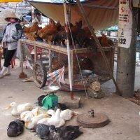 Вьетнамский базар. Можно купить живую дичь! :: Людмила Огнева