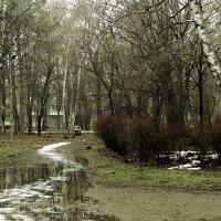такая мокрая зима... ( вариант 2) :: Людмила