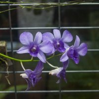 Орхидея :: marmorozov Морозова