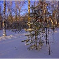 Январь.На лесной опушке. :: Владимир Холодный