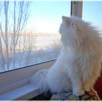 За окном февраль. :: Чария Зоя