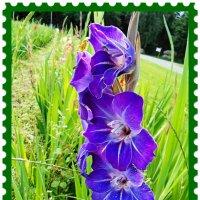 """Почтовая марка """"Гладиолус фиолетовый"""" :: Nina Yudicheva"""