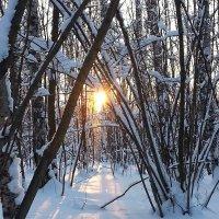 Зимний рассвет :: Наталья Золотова