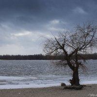 Одинокое дерево :: Александр Семеняка