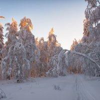 Солнечный лес :: vladimir