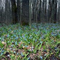 Я в весеннем лесу... :: Евгений Кузнецов
