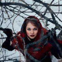 В древесной паутине :: Анна Николаева