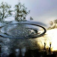 Круги на воде.... :: leonid