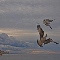 Воздушные танцы..... :: Александр Бойко
