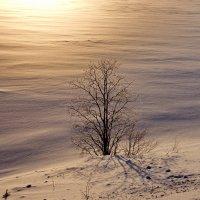 Одинокое дерево :: Александр Максименко