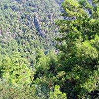 горный пейзаж :: tgtyjdrf