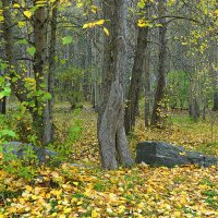 Осень в старом парке :: Елена Перевозникова