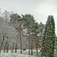 Прогулка по парку :: Александр Смольников