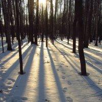 Начало сезона теней на снегу :: Андрей Лукьянов