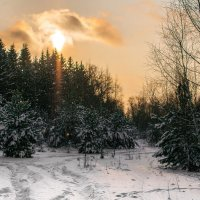 Зимний лес. Продолжение. :: Андрей Куприянов