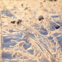 Мороз :: Natalia Dergacheva