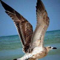 чайка :: ирэн