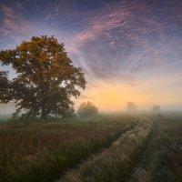Росные дороги... :: Roman Lunin