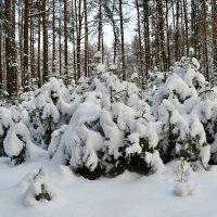 Зимняя картинка :: Милешкин Владимир Алексеевич