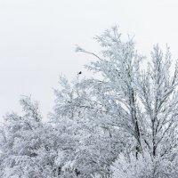 Зимние ветви :: Aнна Зарубина