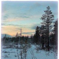 Лыжня в лесу. Автор Натан :: Весна